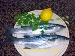 cucina,ricetta,ricette,ricette pesce azzurro,