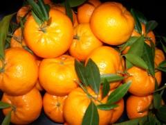 mandarini 002.jpg