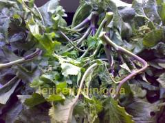 cucina,ricetta,ricette,ricette frittate,frittate con verdure,ricette fotografate,