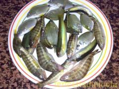 frittura-pesce-misto-di-scoglio.jpg